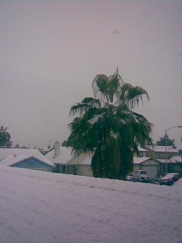 snowpalm