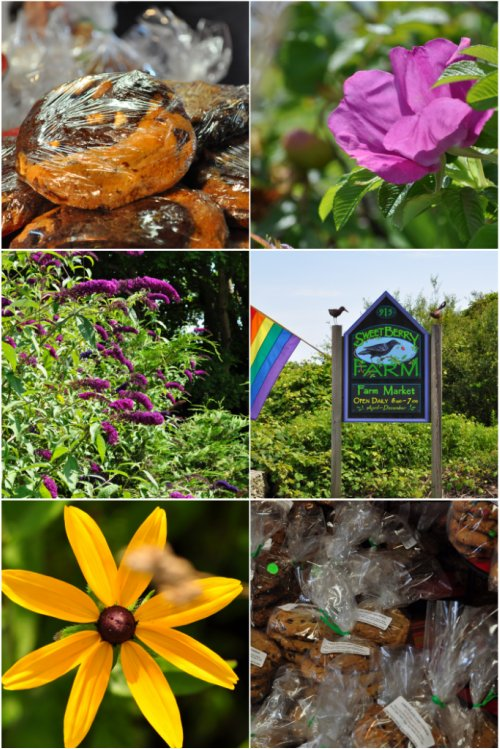 Sweetberry Farm collage