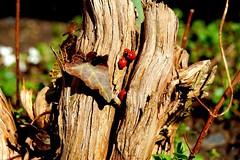 Beetles in the Sun (Dadi Gylfason [Thank you for 500.000 views :-)]) Tags: sun tree enjoy beetles sunbathing
