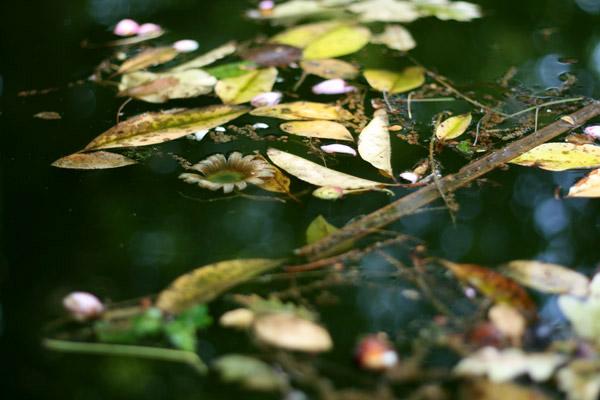 jardin-botanique-porto06