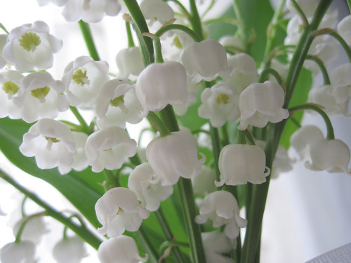 Lily-of-the-Valley 3