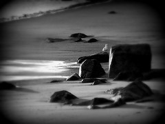 Rockport Beach at Dawn (Professor Bop) Tags: bw beach nature sunrise dawn seagull explore rockport rockportmassachusetts olympusd550 professorbop scenicsnotjustlandscapes