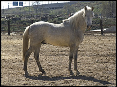 Horse (asinquecualo) Tags: horse naturaleza nature animals caballo fuji animales s9500