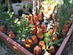 SFG with Feline Poo-Poo Preventors (joeysplanting) Tags: terracotta pots squarefootgardening sfg vegetablebed vegetablebed2