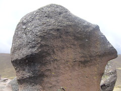 Huaynacotas cabeza