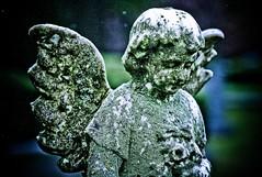 Gloria Patri (code poet) Tags: statue stone angel lexington kentucky cemetary 100mm cherub