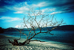Lomo In Club Paradise 32 (Daniel Y. Go) Tags: ocean sea film clouds 35mm lomo lca xpro lomography crossprocessed philippines coron palawan expiredfilm landsape fujiprovia imag clubparadise dimakya wowiekazowie lcarl gettyimagesphilippinesq1