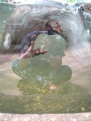 22/06/2008 (Day 2.174) - Otter Blur (Kaptain Kobold) Tags: holiday selfportrait reflection water alan mammal break weekend hampshire otter 365 newforest selfie kaptainkobold fgr 365days 365daus 365sunday 365more 365year2 3650608 owlandottercentre day2174