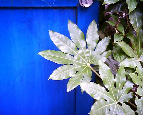 【写真】VQ1005で撮影した青ドアと葉っぱ