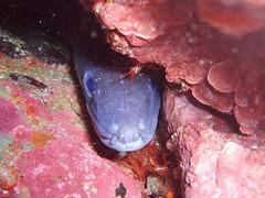 p1010009sf8 (coismarbella) Tags: marbella crustaceos congrios