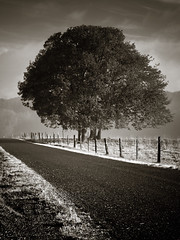 Country Lane . morning (Steven Schnoor) Tags: morning trees plants brown art nature monochrome fog fence landscape mono daylight washington wire flora unitedstates grove country earlymorning lane pacificnorthwest northamerica environment washingtonstate toned backroad pnw graysharbor wirefence westernwashington schnoor intimatelandscape imagesmyth stevenschnoor