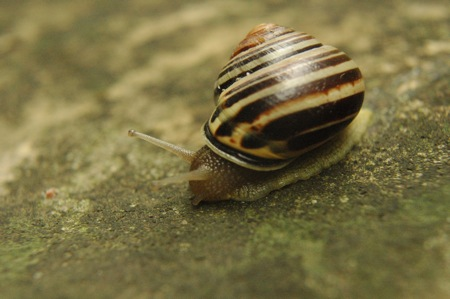 jus' snailing along