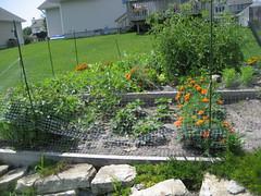 Our garden by trenttsd on Flickr!