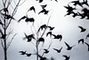 The Birds! (shaymurphy) Tags: bird film silhouette nikon starling scan f80 silhoette nikonf80 explore11august192008