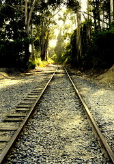 Tracking Trains (*~Dawn~*) Tags: california park trees santacruz train landscape scenery hiking traintracks tracks trail capitola newbrightonbeach hikingtrails californiapark walkingtraintracks