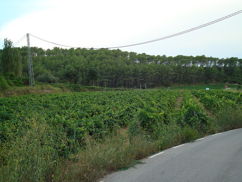 Vines in Parque Natural del Garraf