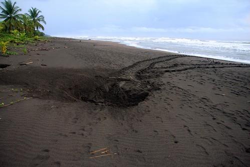 Costa Rica - Día 4 (296)