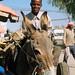 donkey driver