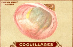 coquillages11
