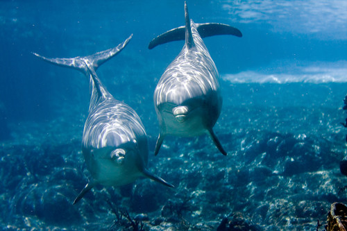 Dolphins by jeffk42.