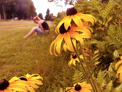 Alone Time (Carolina Wildflower) Tags: graveyard yellowflowers blackeyedsusan