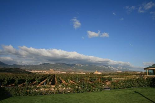 Rioja Autumn Sun