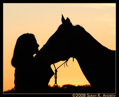 The Bond Between Horse and Human (Rock and Racehorses) Tags: autumn sunset horses horse love silhouette angel creek photography photo newjersey october paint mare farm profile nj meadow trust bond chestnut paints qh 0037 meadowcreek aqha apha quarterhorses skyanimals impressedbeauty citrit quarrterhorse equinephotographer meadowcreekfarm