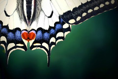 From the bottom (Nelbox) Tags: color colour macro nature butterfly heart globalvillage musictomyeyes simplecolors mywinners abigfave aplusphoto citrit heartawards photographersgonewild novavitanewlife