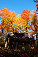 Sugar Shack! (Jeff Power) Tags: autumn trees ontario canada color colour fall leaves landscape maple nikon conservation sugar area syrup shack mountsberg sap d40 explored cans2s mountsbergconservationarea