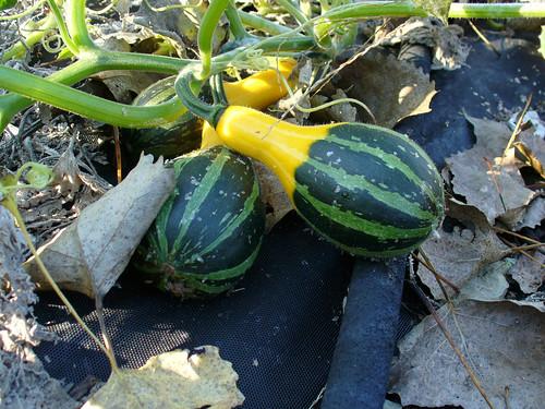 2008-10-16 - The Garden - 0014