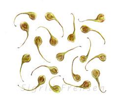'Seeds