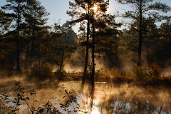 Steamy Lake (RMac_Photography) Tags: blue trees sun reflection tree water beautiful sunrise wow d50 georgia landscape amazing cool nikon earlymorning steam augusta rmac ftgordon