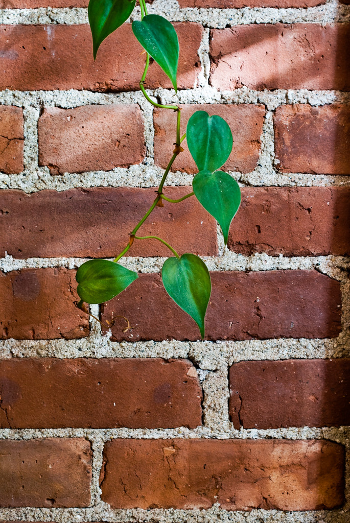 Red Brick Wall & Plant, October 19th