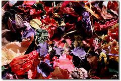 cores & textura & sensaes ... (Fabiana Velso) Tags: textura folhas cores sementes seco secas mistura duetos frenteafrente muitascores fabianavelso