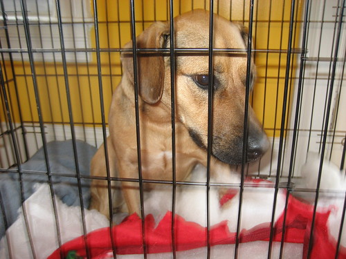 Help me cheer up Taxi Dog when whe is caged
