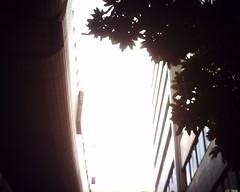 【写真】Sunshine (VQ1005)