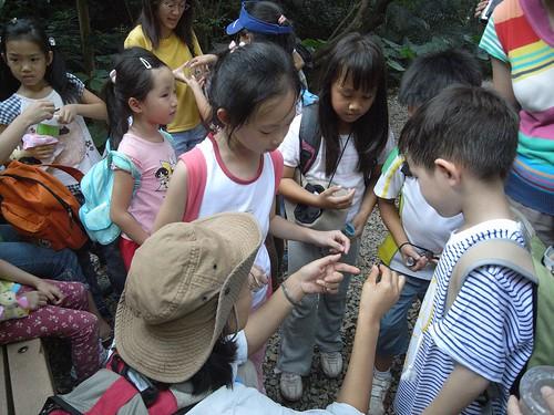 你拍攝的 30觸摸攀木蜥蜴。