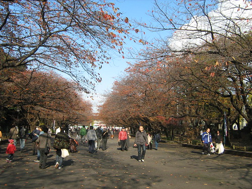 Autumn leaves at Ueno Park 3