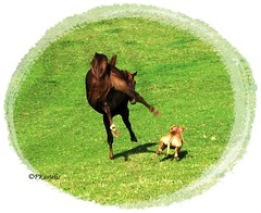 Friendly game (forestsoul) Tags: fab horses horse dog pet pets dogs animal animals farm country slovenia equestrian soe stallion equine quarterhorse loh anawesomeshot diamondclassphotographer flickrdiamond horsesrule forestsoul