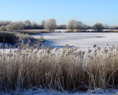 Winterday (tine krogh) Tags: schnee winter snow cold denmark vinter frost gimp kalt dnemark danmark tine sne krogh koldt mywinners damniwishidtakenthat