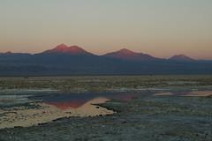 Reserva Los Flamencos (sofía m) Tags: chile america south salt flamingos atacama desierto salar flamencos norte potosí chaxa saltflat litio salardeuyuni reservanacional atacamadesert sofíamontero