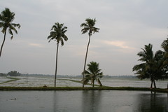 Picture 082 (rbellare) Tags: india kerala alleppey alappuzha