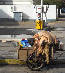Sheep skin. (Erik van der Zwet Slotenmaker) Tags: street de sheep skin morocco maroc casablanca marruecos mouton marokko schaap piel cordero peaux