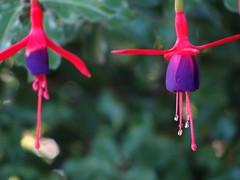 (benjasalazar') Tags: macro closeup flor colores picnik blueribbonwinner enfoque tonos colorphotoaward