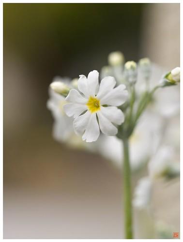 Flowers 081231 #03