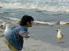 If I could talk to the animals... (annette's art) Tags: ocean seagulls beach children gulls wildwood jerseyshore artofimages annettesart