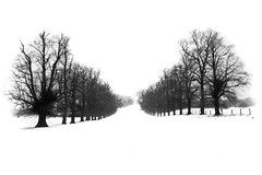 endless white (Hamed Parham) Tags: nottingham uk winter white snow tree  hamedparham  endlesswhite
