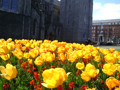 112/365 Flowers outside of St. Patrick's Cathedral (SeanOConnor2010) Tags: 365 project365 instantfave 112365 p3652009