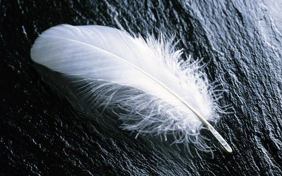 Feather - copia (2)