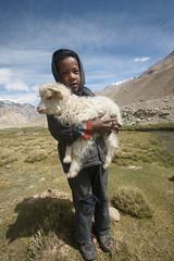 Mary has a little lamb (santanu nandy) Tags: mountain landscape shepherd lamb himalaya leh ladakh